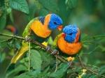Hermosa pareja de periquitos